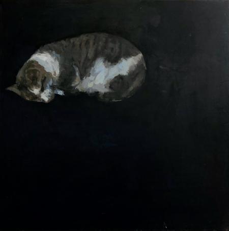 sleeping grey tabby cat with black background